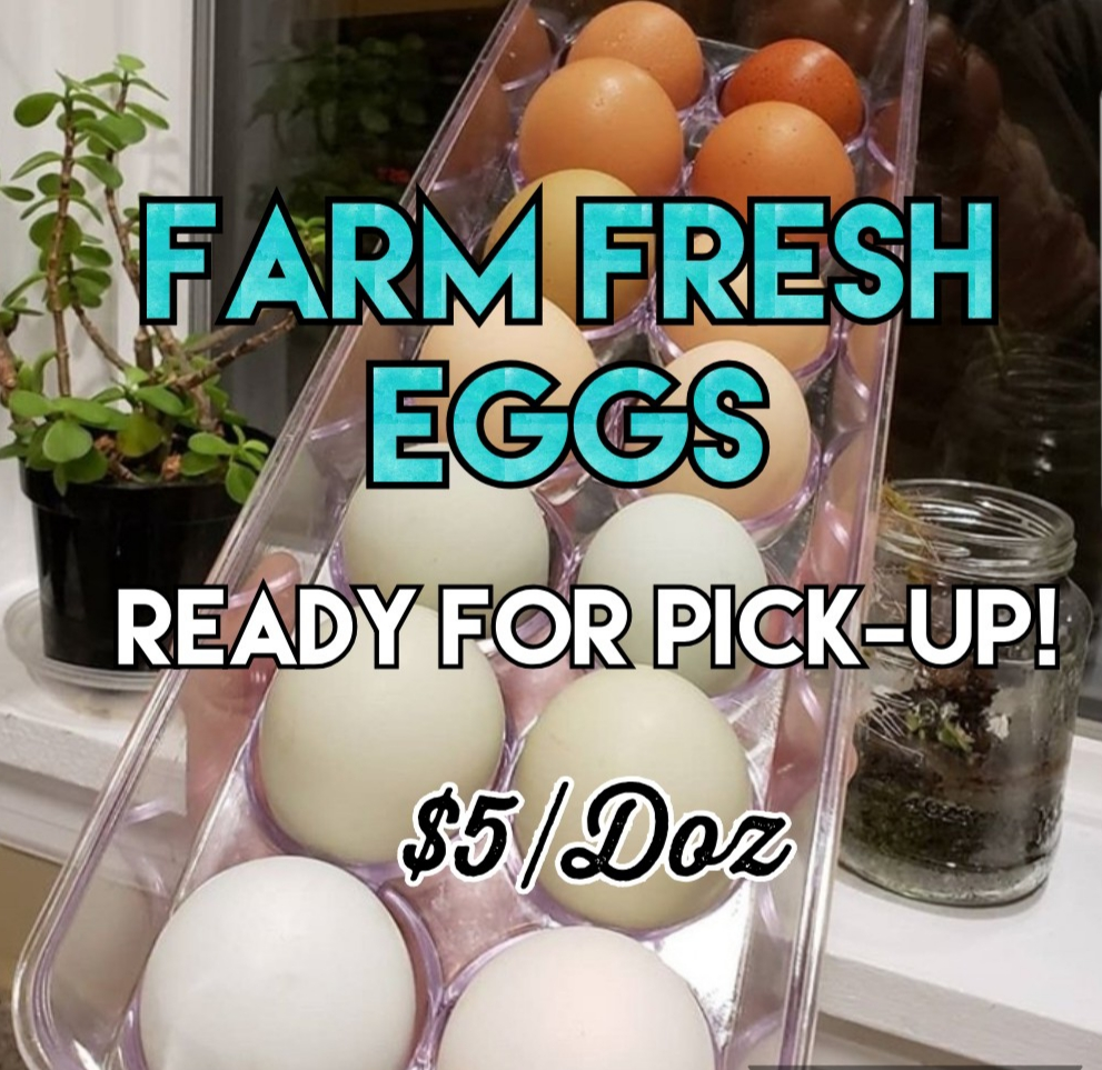 farm fresh eggs from free range happy chickens. Feed non-gmo feed
